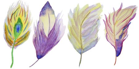 watercolor paper: Set of watercolor feathers. A set of four color watercolor feathers Stock Photo