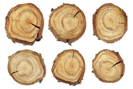 Wood slice texture, Set of slices of wood. Set slice of tree trunk Stock Photo