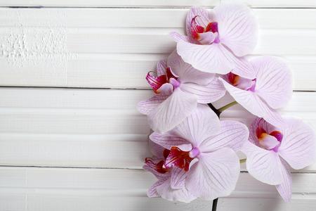 白地木蘭。木製の背景にピンクの蘭の花。蘭の背景