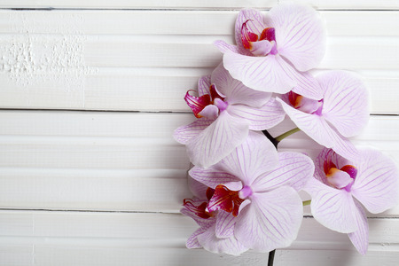 Orchid on white wood background. Pink orchid flowers on a wooden background. Orchid background