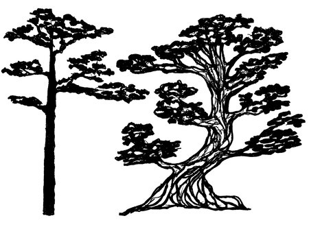 pinetree: Couple of ink conifer trees. Natural design element. Vector illustration. Pine-tree ink silhouette Vectores