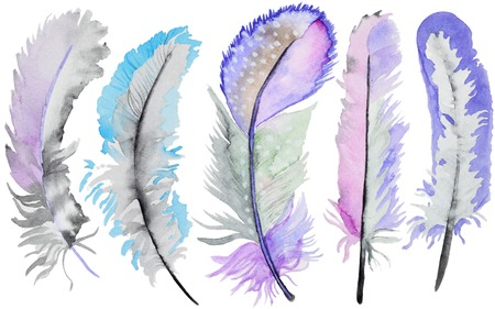 Set of watercolor feathers. A set of multicolor watercolor feathers
