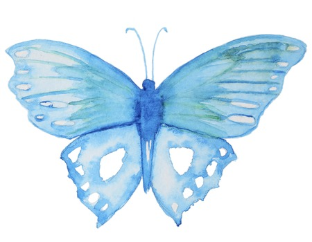 butterfly isolated: Watercolor blue butterfly isolated on white.