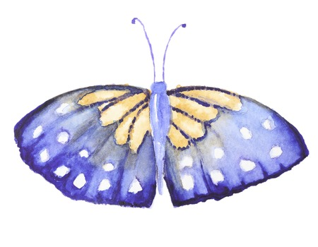butterfly isolated: Watercolor gold and blue butterfly isolated on white. Hand painted watercolor butterfly multicolored for making greating cards, invitation design and other art project