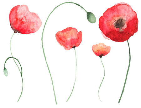 Collection of watercolor poppy flowers set of beautiful watercolor collection of watercolor poppy flowers set of beautiful watercolor poppy on white background perfect mightylinksfo
