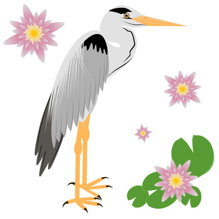 wader: Illustration of a Heron. Heron isolated on white background. illustration Heron. Illustration