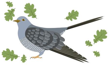 Illustration of cuckoo. Cuckoo on white background. illustration of cuckoo.