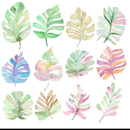 熱帯の椰子入り水彩を残します。シュロの葉の設計のための要素。コレクションのヤシの葉