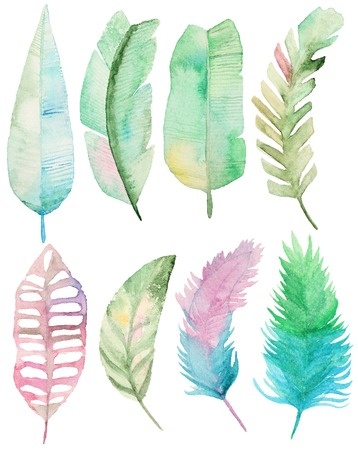 tropical tree: Watercolor set with tropical palms leaves. Palm leaves elements for your design. Collection Palm leaves Stock Photo