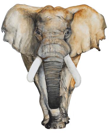 パンフレットと t シャツ、招待カードとはがきの白い背景の水彩画の象。 写真素材