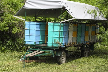 Colorful mobile transport car for beehive whith roof Banque d'images