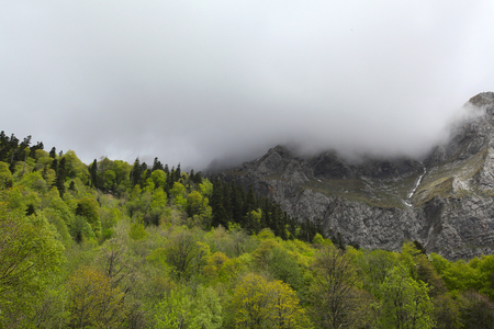mountings: Spring forest on the slopes whith clouds. Caucasus mountains