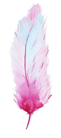 Hand-drawn Watercolor pink Feather isolated on white background