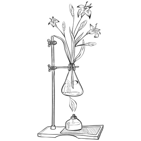 boiling tube: Doodle style laboratory jar with flower and burner illustration in format. Doodle lab equipment. Illustration