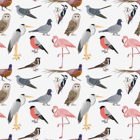 pigeon owl: Realistic birds sealess patern. Barn Owl and Heron, Bullfinch and Pheasant, Woodpecker and Flamingo. illustration
