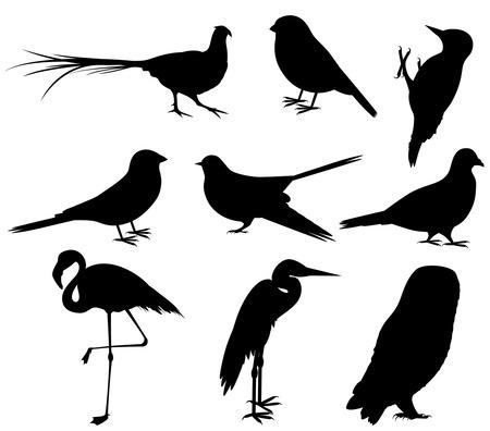 Verzameling van vogelsilhouetten