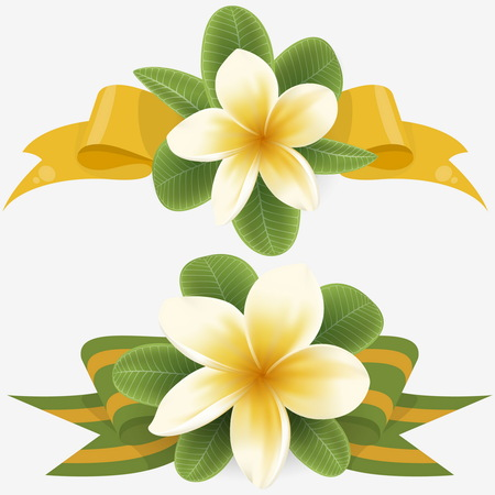 White and yellow Plumeria Flowers in realistic style on white background. Two Tropical Flower branch with ribbon. Illustration