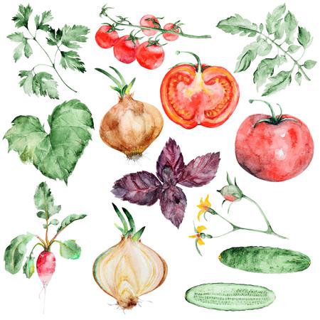 Aquarel groenten instellen Stockfoto