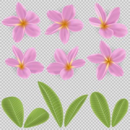 ピンクと黄色のプルメリアの花