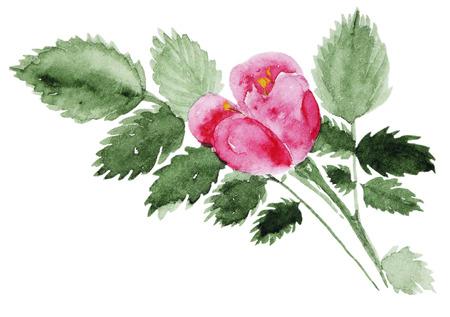 Watercolor Briar set