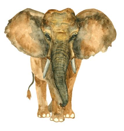 Watercolor hand drawn Elephant Stock fotó