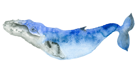 Watercolor blue whale Stock Photo
