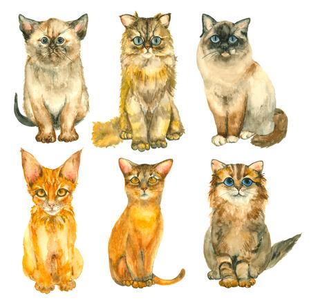 Gatti disegnati a mano acquerello Archivio Fotografico - 84287185