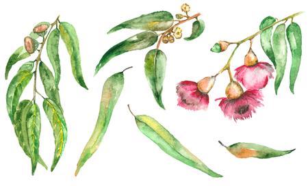 Aquarelle peinte à la main avec des eucalyptus Banque d'images - 84287189