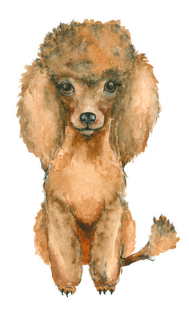 shaggy: Hand drawn poodle