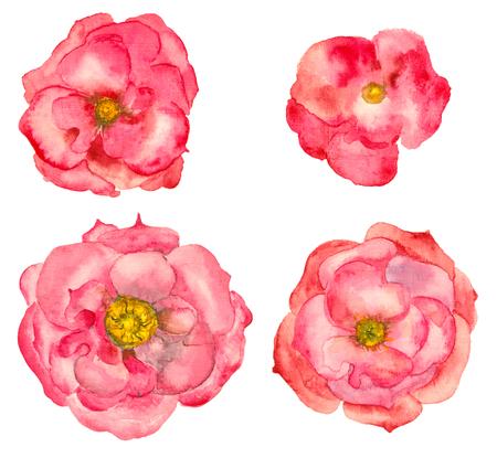 pezones: Acuarela dibujado a mano salvaje rosa Foto de archivo