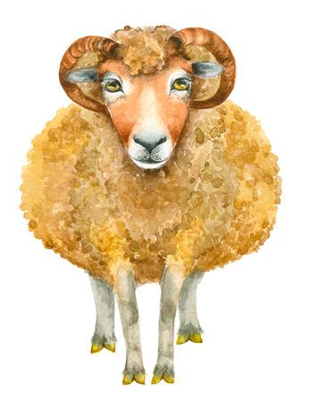 Watercolor Sheep print