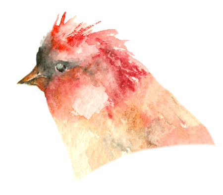 Watercolor tropic bird Stock Photo