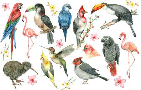 Conjunto de pássaros tropicais Foto de archivo - 91752699