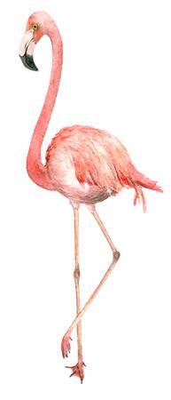 Flamant d'oiseau aquarelle Banque d'images - 92267591