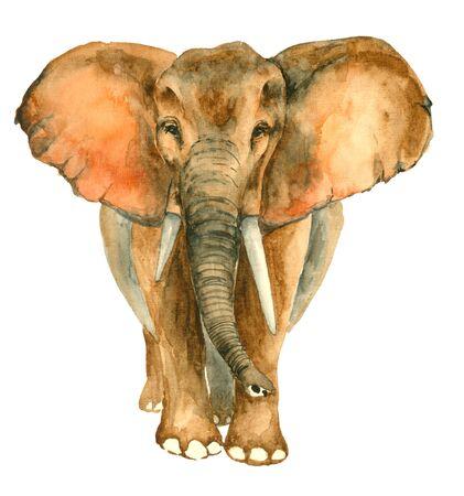 Watercolor hand drawn Elephant Фото со стока