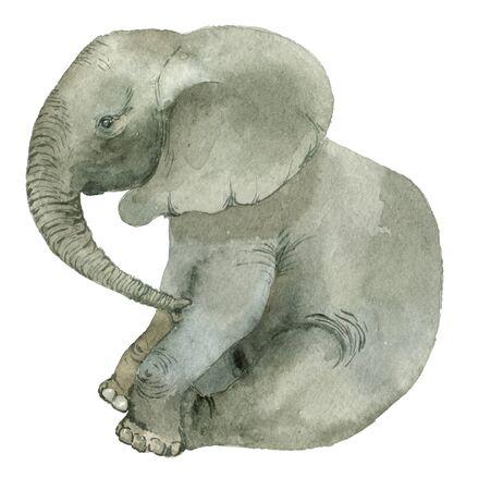 Sitting funny elephant