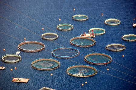 fish farm: fish farm in greece