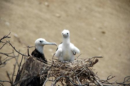 bird sanctuary: bird sanctuary Isla del muerte, Ecuador