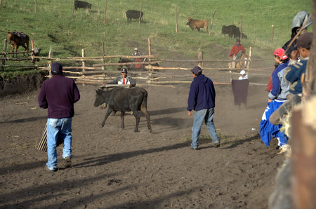developing country: corrida in small village in andes, ecuador