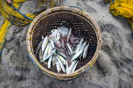 subsist: fish in the basket after being caught on Senggigi beach, Lombok, Indonesia