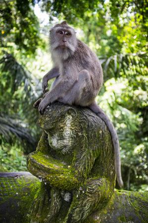 ubud: Monkey forest Ubud, Bali, Indonesia Stock Photo