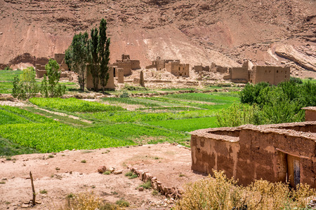 mountain oasis: Todgha (Todra) Gorge, Dades Valley (Valley of Thousand Casbahs). Morocco, Africa