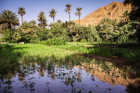 fragmentation: Oasis in Todra Gorge, Morocco, Africa