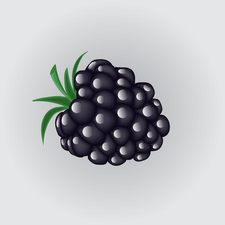 bramble: Blackberries isolated on a white background Illustration