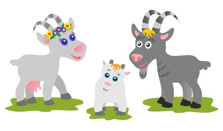 Goats family  photo