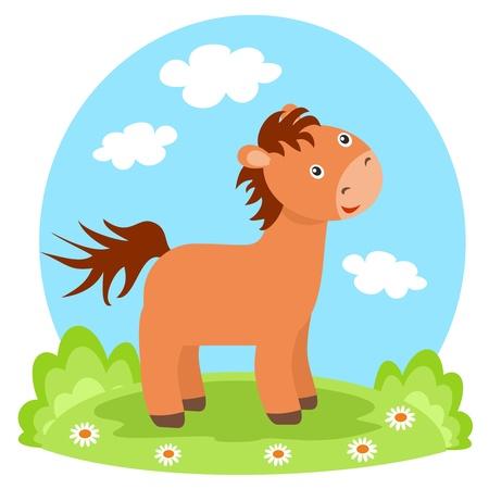 lovely colt on glade Stock Photo