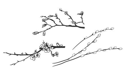 vecteur, graver, printemps, branches, saule
