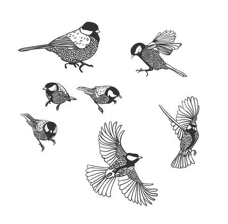tit vector sketch birds set design