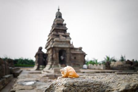 sea shell at Seashore Temple, Mahabalipuram