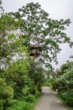 arunachal pradesh: Tree House located in Asias cleanest village Mawlynnong, Meghalaya.